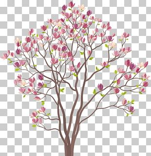 Southern Magnolia Tree PNG