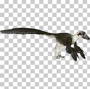 Zoo Tycoon 2 Velociraptor Dakotaraptor Utahraptor PNG