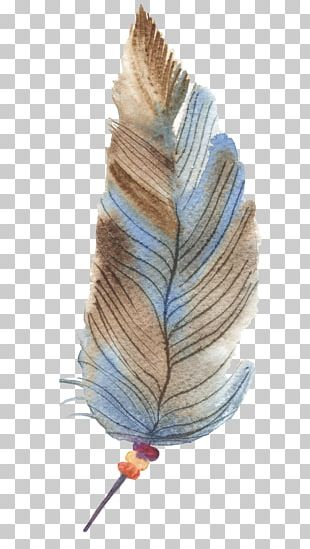 Feather Drawing PNG