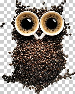 Black-and-white Owl Desktop Barn Owl PNG