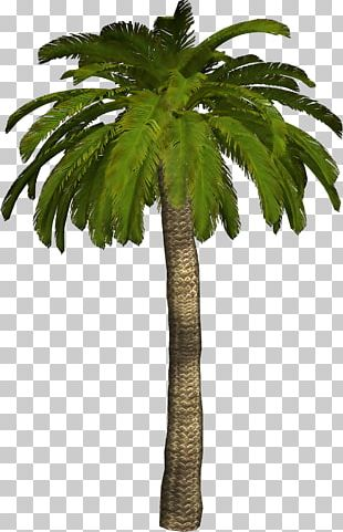 Palm Tree Material PNG Images, Palm Tree Material Clipart Free Download