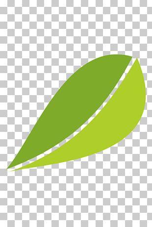 White Tea Fuding Green Tea Leaf PNG