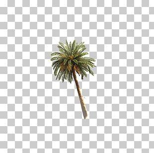 Coconut Arecaceae Leaf Trunk PNG