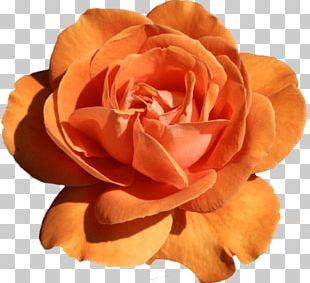 Flower Garden Roses PNG
