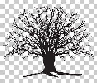 Tree Silhouette Oak PNG