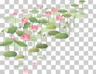 Flower Nelumbo Nucifera Wall Decal Sticker PNG