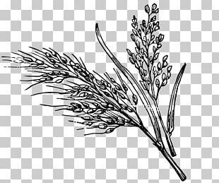Black And White Wild Rice White Rice PNG