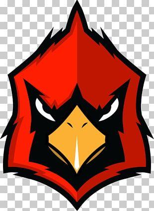 Logos And Uniforms Of The St. Louis Cardinals Arizona Cardinals Logos And Uniforms Of The St. Louis Cardinals PNG