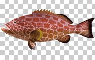 Northern Red Snapper Fish Products Reptile Marine Biology Fauna PNG