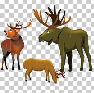 Reindeer Elk Moose Red Deer PNG