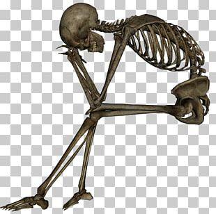 Human Skull Symbolism Human Skeleton Death PNG