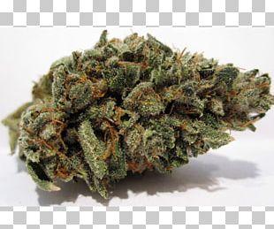 Kush Cannabis Luke Skywalker Hash Oil Blue Dream PNG
