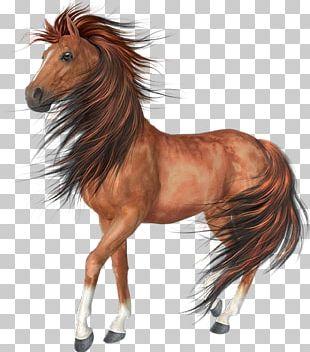 Arabian Horse Akhal-Teke Black PNG