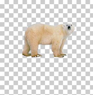 Polar Bear Polar Regions Of Earth PNG