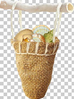 Seashell Mollusc Shell Pearl PNG