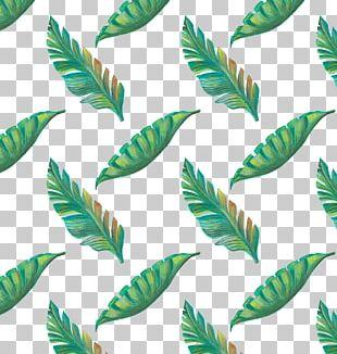 Leaf Tropics Drawing PNG