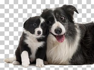 Border Collie Rough Collie Smooth Collie Puppy Old English Sheepdog PNG