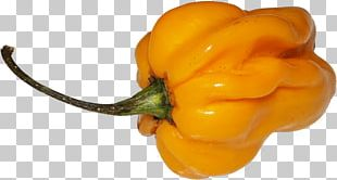 Habanero Chili Pepper Yellow Pepper Bell Pepper Paprika PNG
