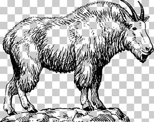 Pygmy Goat Nigerian Dwarf Goat Sheep Alpine Goat PNG