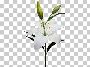 Cut Flowers Artificial Flower Lilium Candidum Garland PNG