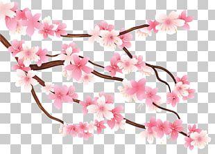 Branch Cherry Blossom PNG