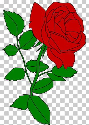 Garden Roses Cut Flowers Rose Garden Rosaceae PNG