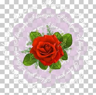 Garden Roses Cabbage Rose Cut Flowers Beach Rose PNG