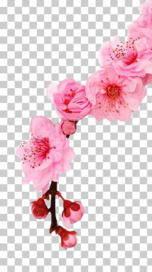 Cherry Blossom Stock Photography Spring Cherries PNG