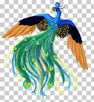 Feather Bird Peafowl PNG