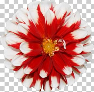 Flower Stock Photography Amazon.com Learn Spritekit PNG