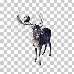 Red Deer Moose Drawing PNG