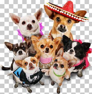 Beverly Hills Chihuahua Beverly Hills Chihuahua Blu-ray Disc DVD PNG