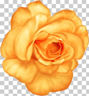 Blue Rose Blue Rose Flower PNG