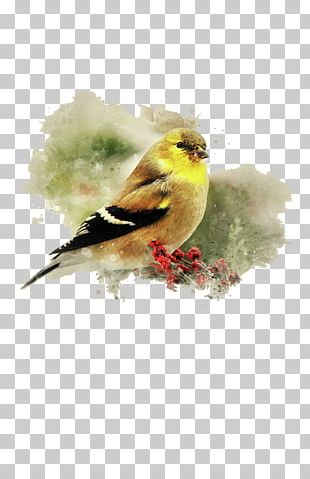 Finch Watercolor Painting Art Bird PNG