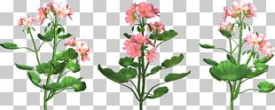 Cut Flowers Drawing PNG