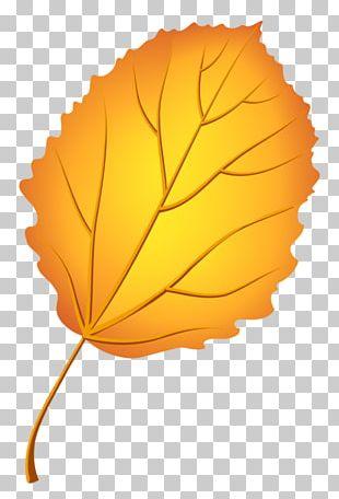 Autumn Leaf Color European Aspen Tree PNG