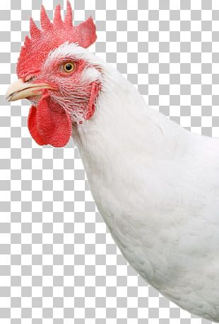 Rooster Bresse Gauloise Chicken As Food Hen Egg PNG