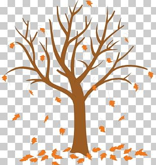 Trees And Leaves Autumn Leaf Color PNG