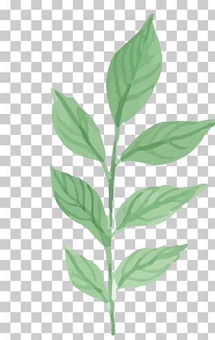 Watercolor Painting Leaf PNG