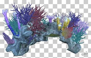 Coral Reef Marine Invertebrates PNG