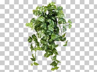 Amazon.com JMC Floral Devil's Ivy Spring Greens Flowerpot PNG