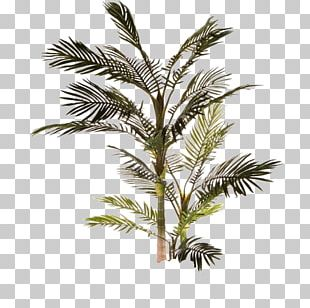Babassu Clipping Path Arecaceae Tree PNG