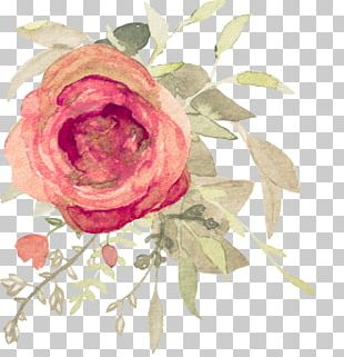 Garden Roses Flower Watercolor Painting Floral Design PNG