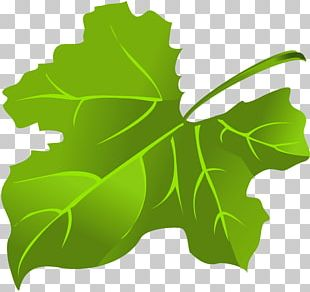 Maple Leaf Green PNG