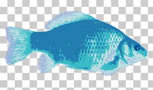 Coral Reef Fish Marine Biology Deep Sea Fish Saltwater Fish PNG