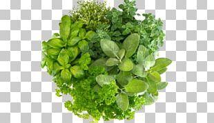 Herbal Tea Masala Chai Health Basil PNG
