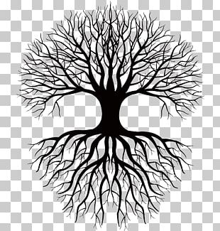 Coloring Book Drawing Root Tree PNG