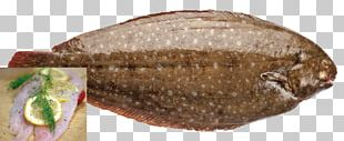 Fish Products Tilapia PNG