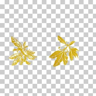 Leaf Olive Yellow PNG