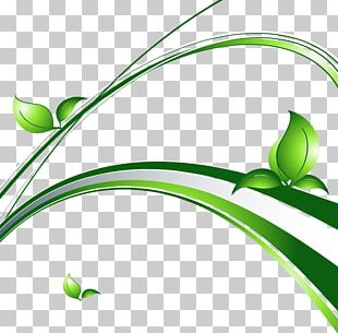 Herbaceous Plant Leaf Graphics PNG